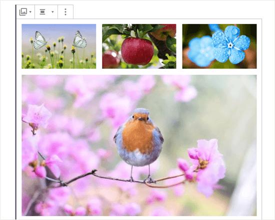 Galerideki dört resim (kelebekler, elma, mavi çiçekler ve robin)